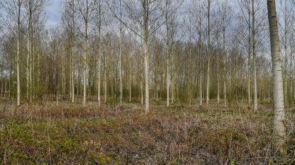 Na tien jaar onderhandelen: Natuurpunt koopt 20 hectare extra bos aan in Scheldevallei waardoor natuurgebied in grootte verdubbelt