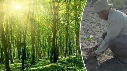 40 jaar lang plantte hij elke dag een boom. Nu leven er neushoorns, tijgers en olifanten in zijn bos