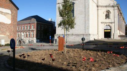 Vragen over gekapte boom en Vredesboom op de Houtmarkt