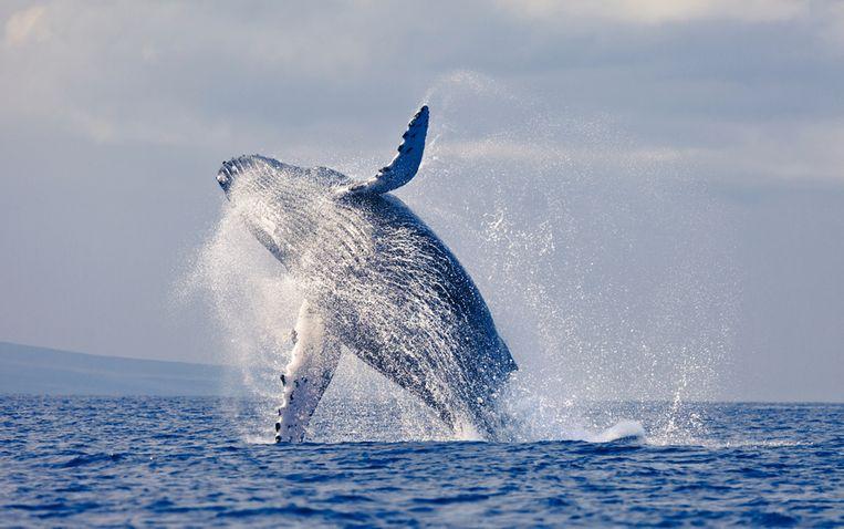 Beeld van walvis ter illustratie.