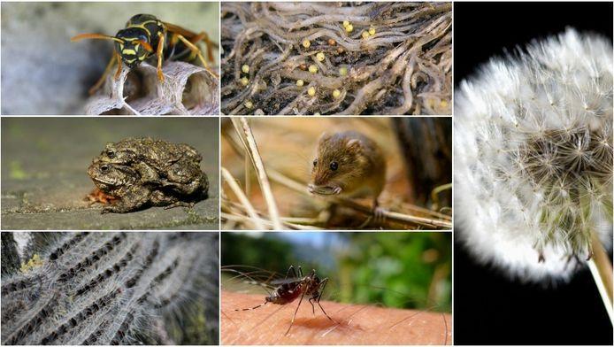 Worden we dit jaar overspoeld met muizen, wespen en rupsen?