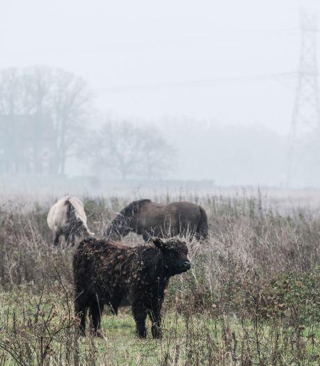 Op veel meer plekken blijkt rivierengebied vervuild: risico op gif in vlees van wilde grazers