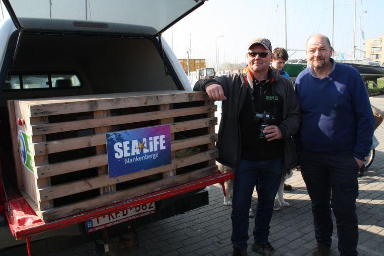 Luc David en Dominique Vandenbohede waren er op 3 februari ook bij toen het dier strandde in Nieuwpoort.