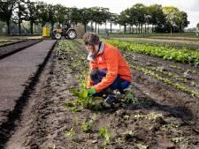 Herenboerderij trapt op de rem na afwijkende waarden in groenten
