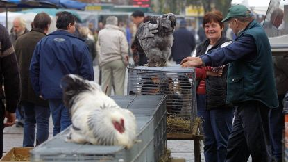 Dierenmarkt op zondag blijft voorlopig verboden