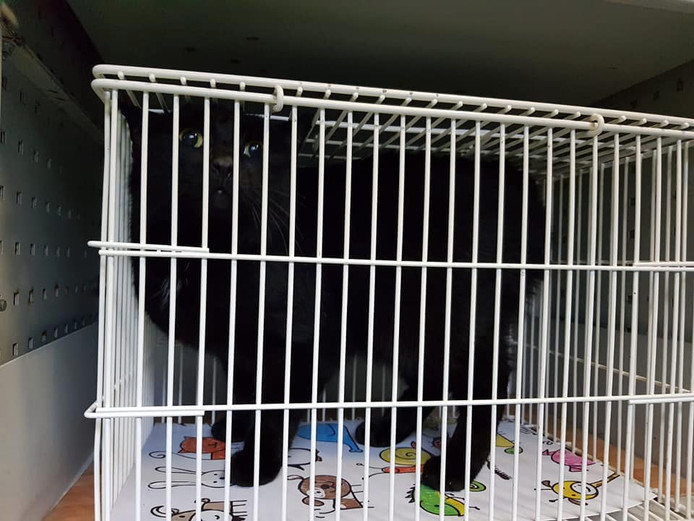 Kat Smoes is gevangen