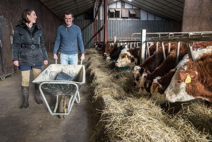 In de stal willen Janine Keller en Paul den Dunnen 's winters hun zeventig Hereford koeien houden.