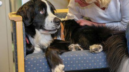 Switch, de liefste politiehond van het land, troost slachtoffers tijdens verhoor