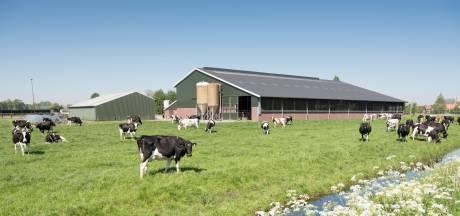 Mag een boerderijwoning ook áchter de stallen? Gemeente en Rielse boer worden het niet eens