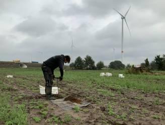 Archeologen vinden sporen naar steentijd op terrein in Rieme