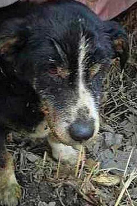 Hond klautert uit graf nadat hij levend was begraven door baasje