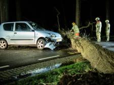 Auto botst op omgewaaide boom in Driebergen, bestuurster en haar hondje ongedeerd