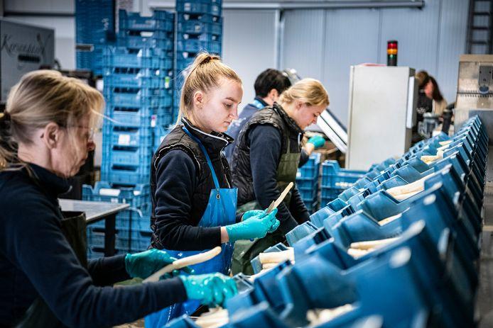 Horecapersoneel verwerkt nu de aspergeoogst bij Hof van Huijbers in Mierlo.
