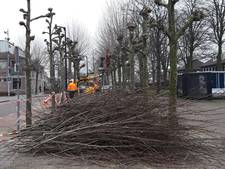 Snoeibeurt voor bomen in centrum Heesch