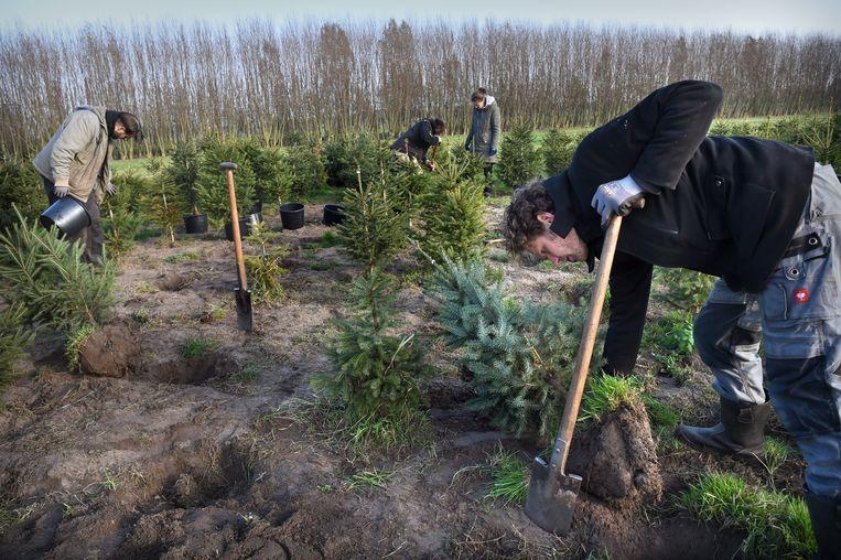 Erwink Kooijman van adopteer een kerstboom. Beeld Marcel van den Bergh
