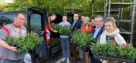 Buurten halen 40.000 geraniums op bij de stad: een record