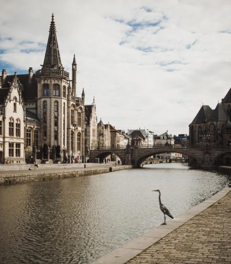 Natuur neemt het even over, reiger als enige op de Gras- en Korenlei in Gent