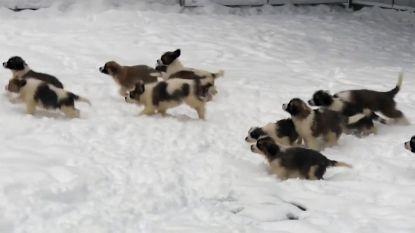 Russische leger wenst iedereen een gelukkig nieuwjaar...met schattige puppy's