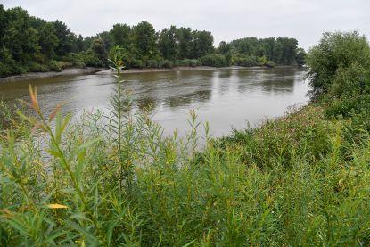 """Klimaatopwarming en toekomstig """"mediterraan klimaat"""" bedreigen Vlaamse inheemse plantensoorten"""