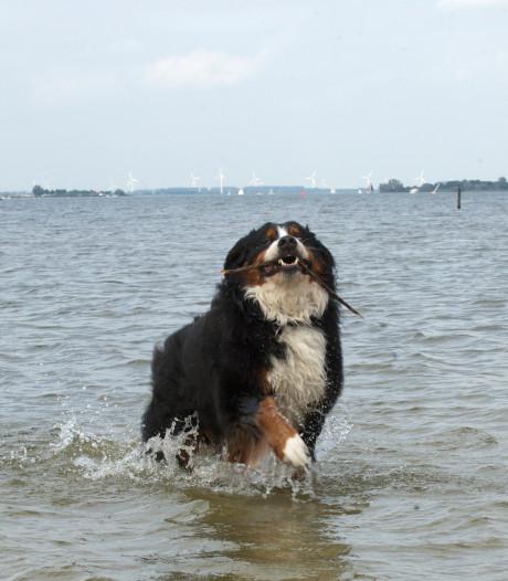 Hond neemt bezit van Veluwse stranden