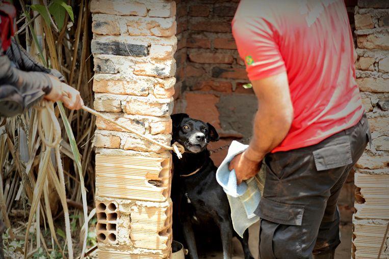 Reddingsteams proberen een geredde hond te evacueren.