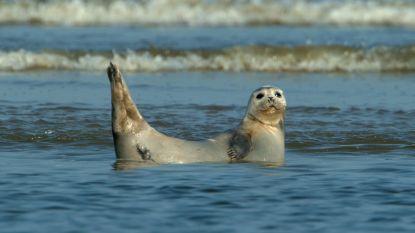 """Hulpdiensten rukken uit voor groepje mensen in zee, die """"zeehond proberen te redden"""""""