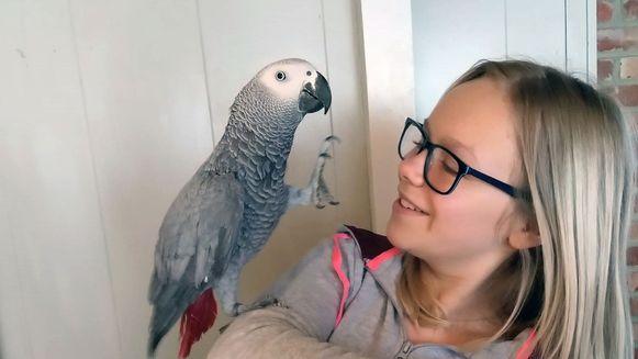 De familie De Smet is op zoek naar papegaai Coco.