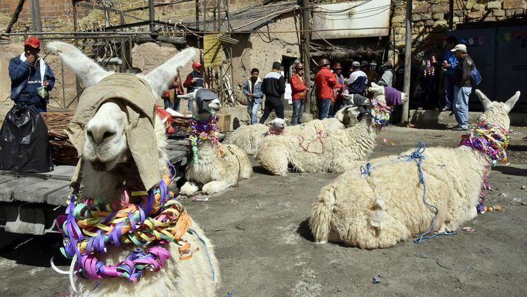 Mijnwerkers maken lama's klaar voor het offerfeest in Bolivia. Deze en meer foto's die de krant niet haalden vindt u op volkskrant.nl/kijkverder. Beeld afp