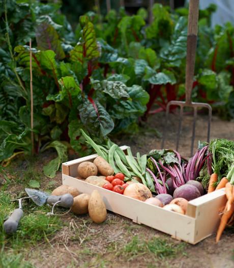 Cursus moestuinieren: 'Eten uit je eigen tuin is lekkerder'