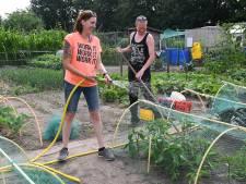 Zo komen deze volkstuinders uit Boxmeer de droogte door