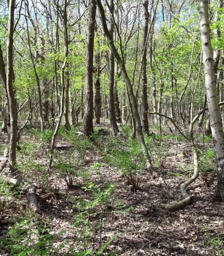 Aanplant kleine bossen is mogelijk Schouws antwoord op stikstofproblemen
