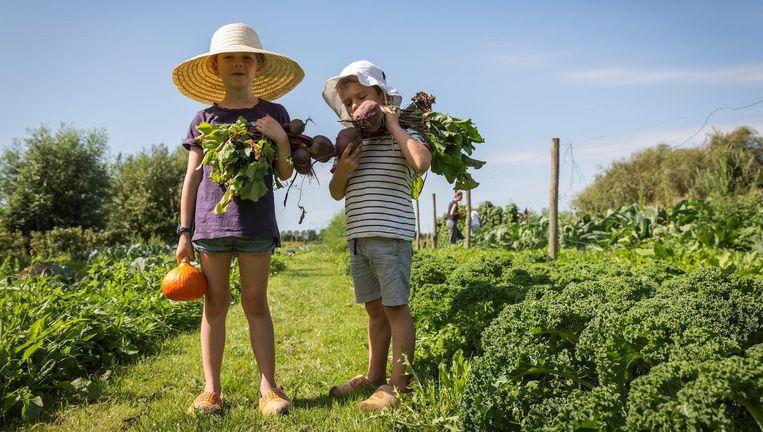 Zorgboerderij De Boterbloem mag blijven bestaan Beeld Dingena Mol