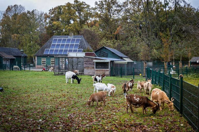 Kinderboerderij de Kleine Meer.