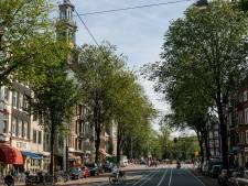 Gemeente wil grote bomen op Rozengracht terugplanten