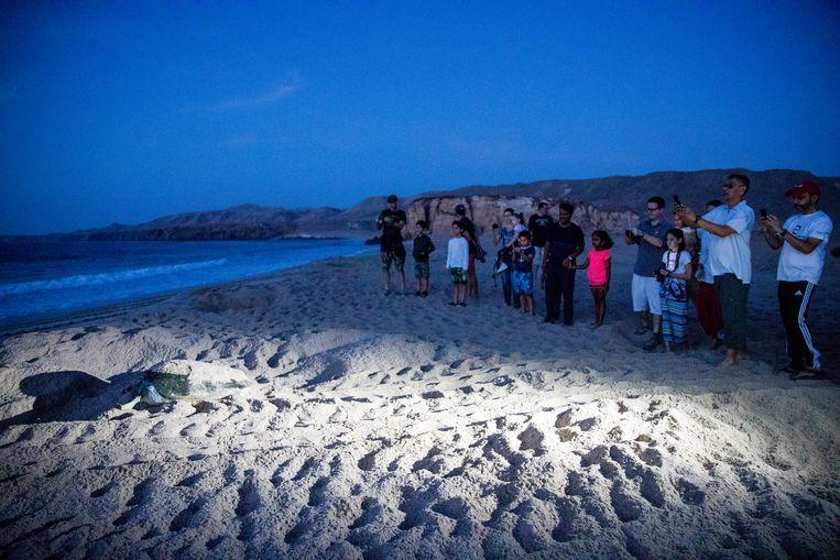 Op het strand van Ras Al Jinz leggen de zeeschildpadden hun eieren, gadegeslagen door toeristen. Beeld null