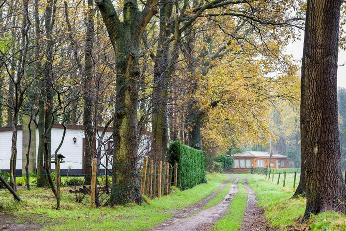 Recreatiewoningen in de Rucphense bossen.