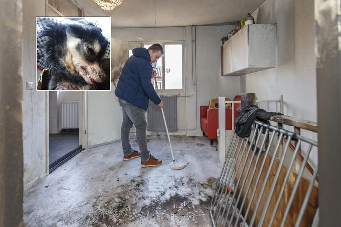Bewoner Lourens Dinkelberg maakte schoon na brandstichting in zijn woning. Zijn hondje (inzet) overleefde het drama niet.