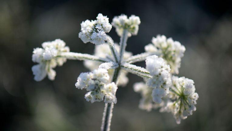 In de Ardennen krijgt de neerslag een winters karakter.