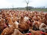 'Boeren moeten zich eierschandaal zelf ook aanrekenen'