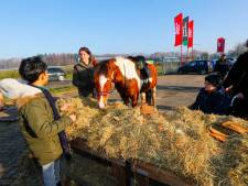Feestmaaltijd voor paarden in Veldhoven
