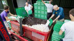 Nederlandse luizenbestrijders aansprakelijk voor miljoenenschade fipronil