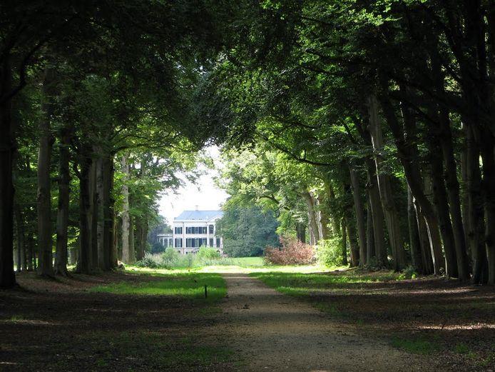De laan naar landgoed Broekhuizen wordt omzoomd door honderden beuken.
