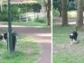 Hond Leevo zwierf de afgelopen maanden herhaaldelijk door de Gemertse wijk Doonheide.