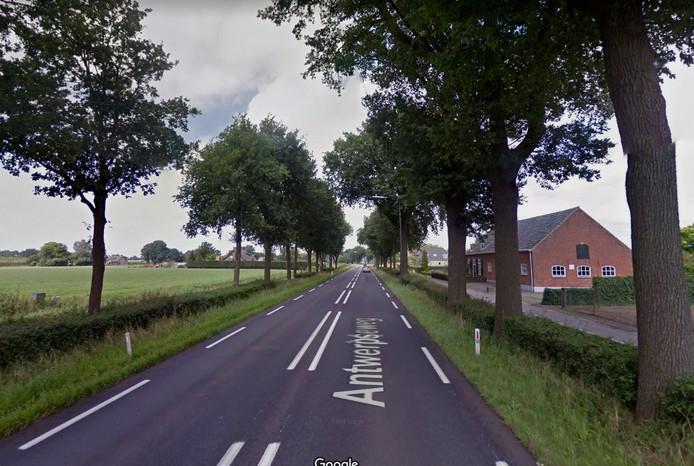 De kaarsrechte bomenrij tussen Breda en Zundert is een van de overblijfselen van de Napoleonroute, aldus wethouder Johan de Beer.