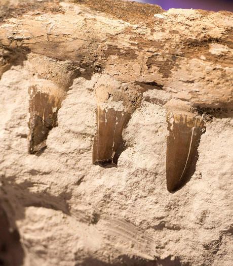 Zeeleven herstelde zich razendsnel na uitsterving in tijdperk Perm