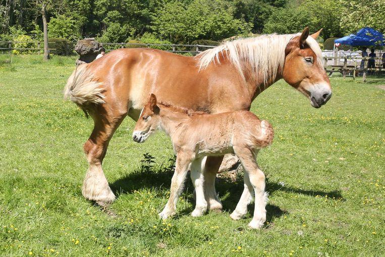Ook de bekende Brabantse Trekpaarden kregen een augmented reality-beleving in de brochure.