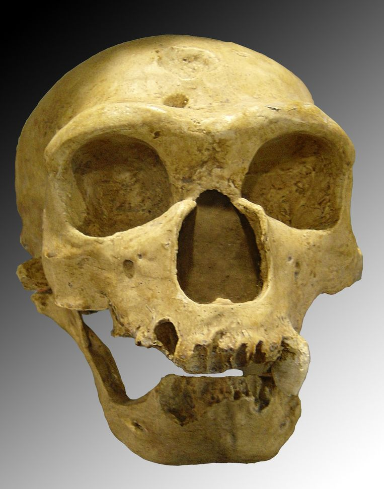 De schedel van een Neanderthaler Beeld Luna04, Wikimedia Commons