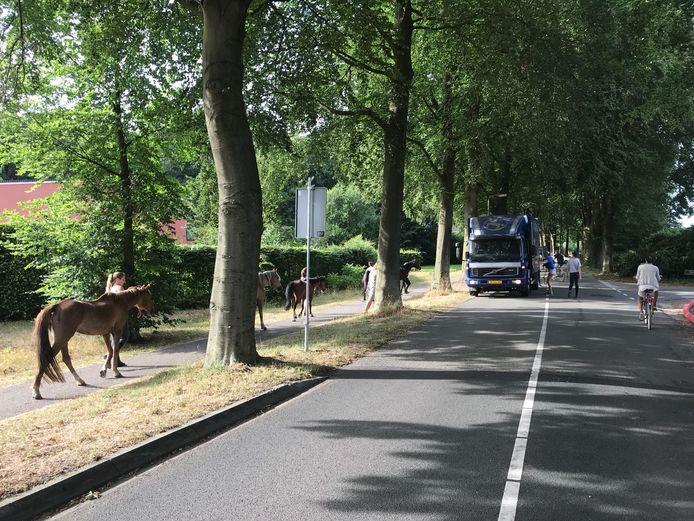 De evacuatie van de paarden bij de manege.