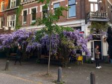 Waarom een boom als dak in Nederland niet zo'n goed idee is