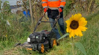 Moerbekenaars brengen 2 ton elektronisch afval naar containerpark: burgemeester De Caluwé maait gras Samentuin Koudenborm